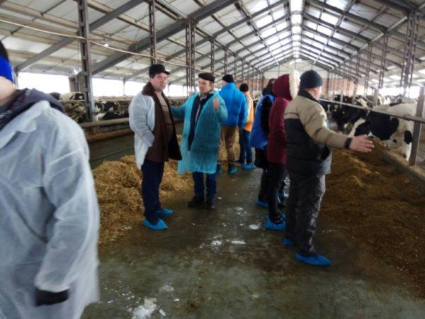 Producătorii de lapte și-au dezvoltat cunoștințele în îngrijirea bovinelor