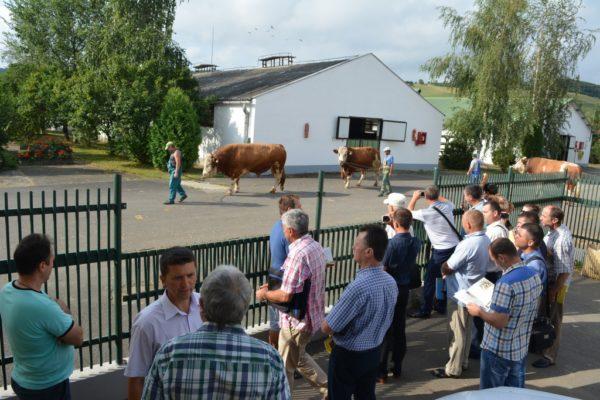 Medici veterinari de libera practica si inspectori din cadrul DRSA au întreprins o vizita de studiu in Romania