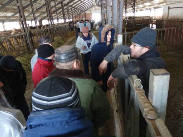 (Română) Producătorii de lapte și-au dezvoltat cunoștințele în îngrijirea bovinelor